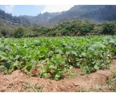 Best Hillview Plots for Sale with Loan arrangements at Kodaikanal