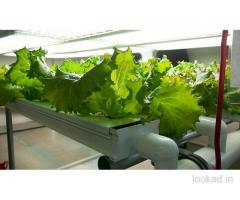 Buy Organic Fruits and Vegetables Online - Hydroponic Planting at Home