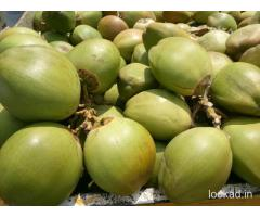 Tender Coconut and Coconuts Wholesale
